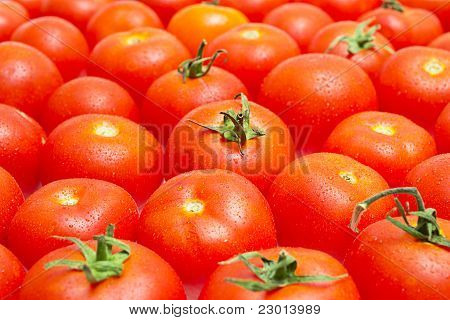 Multitude Of Tomatoes Close-up View