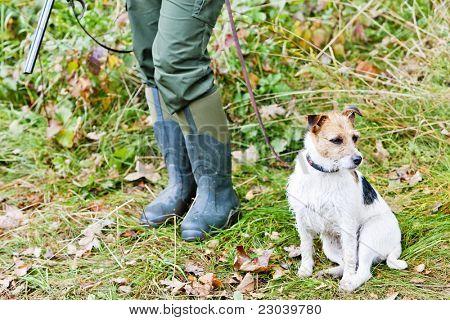 hunting dog with hunter