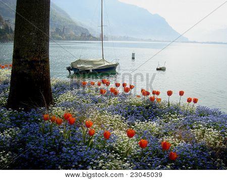 Flowers along Lake Geneva in Switzerland