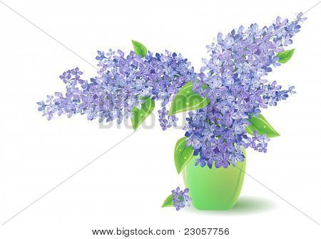 Bunch of lilac