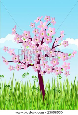 Blossoming spring tree on green grass