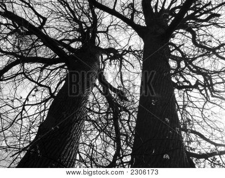 Creepy Intertwined Trees