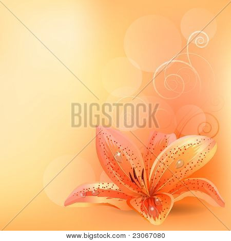 Pastel background with orange lily