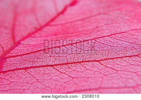 Closeup Of Dried Red Leaf