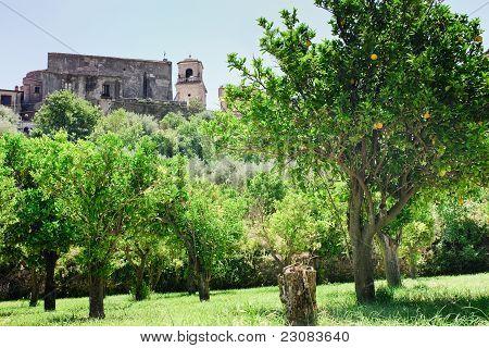 Orangenbäume in der Nähe von Mauern der mittelalterlichen Kirche In Sizilien