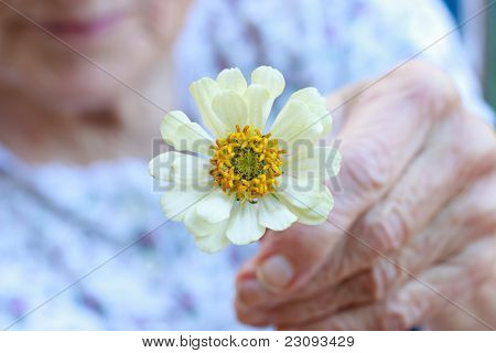 Senior lady holding white flower