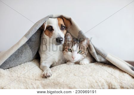poster of Dog and cat together. Dog hugs a cat under the rug at home. Friendship of pets