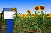 picture of biodiesel  - an old gas tank in a field of sunflowers - JPG