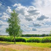 Natural Scenic Landscape Summer Nature With Tree On Green Shore Of Lake Against Cloudy Blue Sky. Sce poster