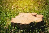 Old Tree Stump On Green Grass Field, Garden. The Stump Is Surrounded By Green Grass Field. poster