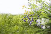 Wild Flowers Onthe Meadow. Meadow On A Hillside Covered With Wild Flowers And Grass. poster
