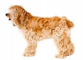 picture of side view  - Dog profile  - JPG