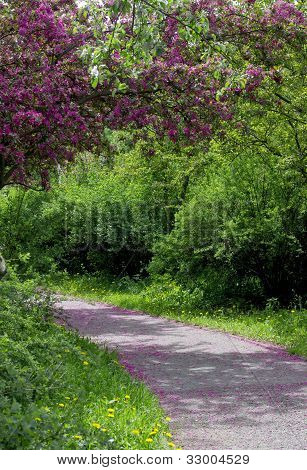 A Road In A Spring Park