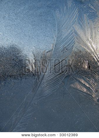 Feathery Frost on Window