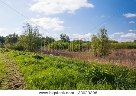 Dutch Nature Reserve In Springtime
