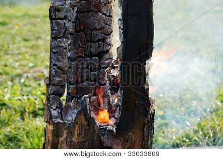 Smouldering Tree Trunk Burned Out In The Middle