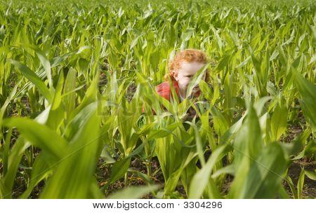 Little Gilr In Crop Field