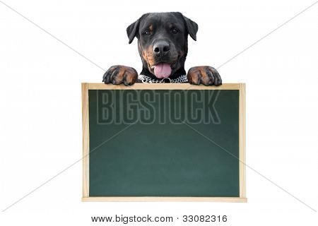 Dog's message isolated on white background