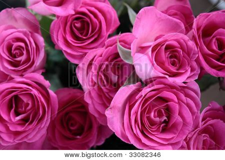 Flower theme: Pink roses