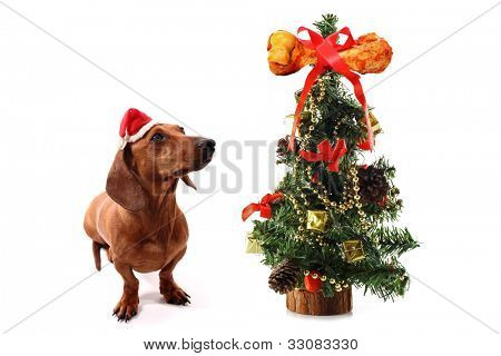 Dog's Christmas tree with bone on the top on white background