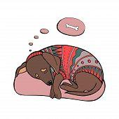Vector Sleeping Dachshund Dog. Dachshund Dog In Sweater. Printing poster
