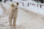 Homeless Dog With Chip In Ear On Winter Road, Copy Space. Not Purebred Good Kind Doggy, Cute Friend. poster