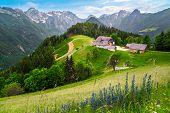 Amazing Spring Landscape With Alpine Flowers And Snowy Mountains In Slovenia. Logarska Dolina And Al poster