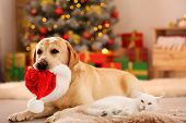 Adorable Cat And Dog With Christmas Hat Together At Home. Cute Pets poster