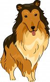 stock photo of collie  - Illustration Featuring a Collie - JPG