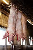 stock photo of slaughterhouse  - slaughtered in a slaughterhouse pig hanging from the ceiling - JPG