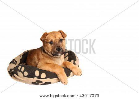 Mastiff Puppy Lying On A Dog Bed