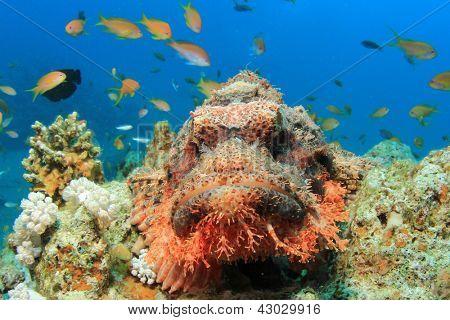 Smallscale Scorpionfish