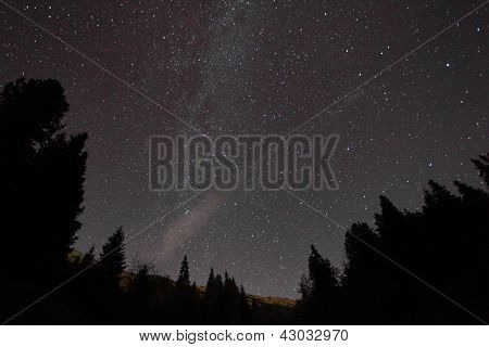 Silhouette Of Trees Against Night Sky With Stars