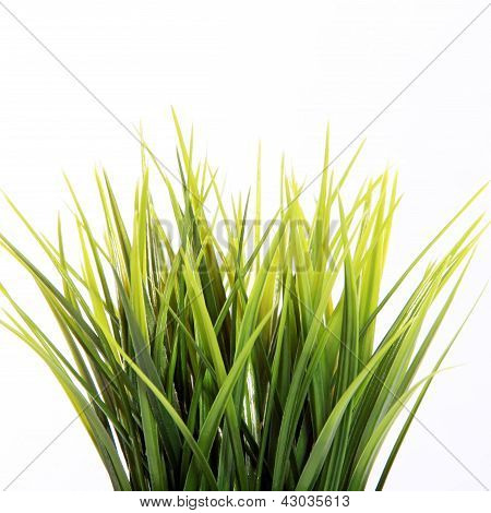 Grama fresca verde Primavera