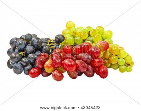 Grape.isolated.