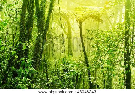 Tropical green mossy rainforest with mist and fog in early morning.