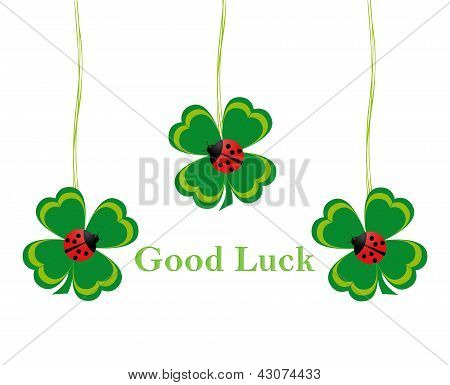 Four leaf clovers for Good Luck