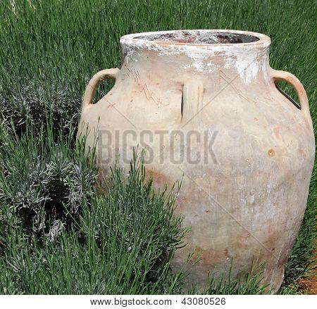 Jar In Green Grass
