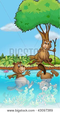 Illustration der drei Biber spielen am Fluss