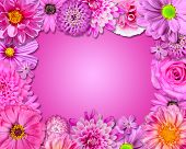 stock photo of carnations  - Flower Frame with Pink Purple Flowers Isolated on Pink Background - JPG