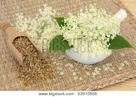 Meadowsweet herb flowers dried and fresh used in natural alternative medicine. Filipendula ulmaria.