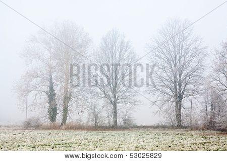Foggy Winter Trees
