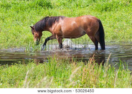 Paddling Horse