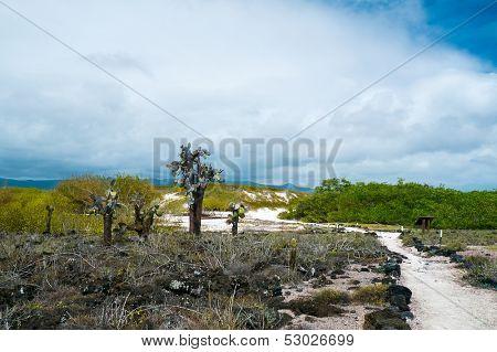 View of an area with Opuntia cactus at Galapagos island of Santa Cruz