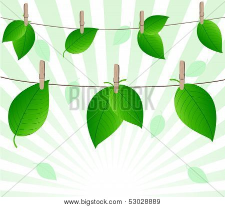 Vector Illustration Of The Leaves On Rope On Sunny Background