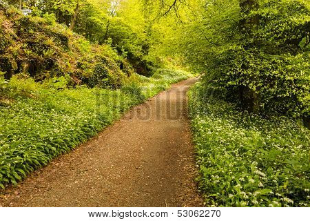 Hiking Trail Going Into Bright Woods