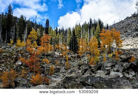 Fall Aspens and Granite Boulders