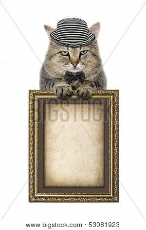 Cat In A Hat And A Butterfly Tie Relies On The Picture Frame