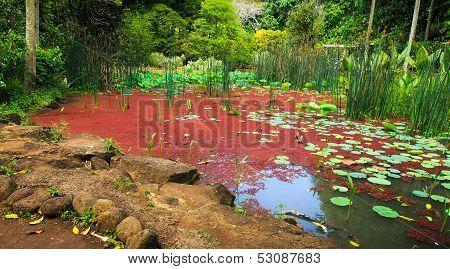 Red Algae Garden At Waimea Valley, Oahu, Hawaii