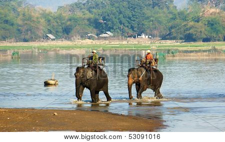 Mahout Riding Elephant